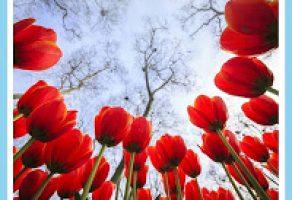 Bimeks'ten Bahar Kampanyası